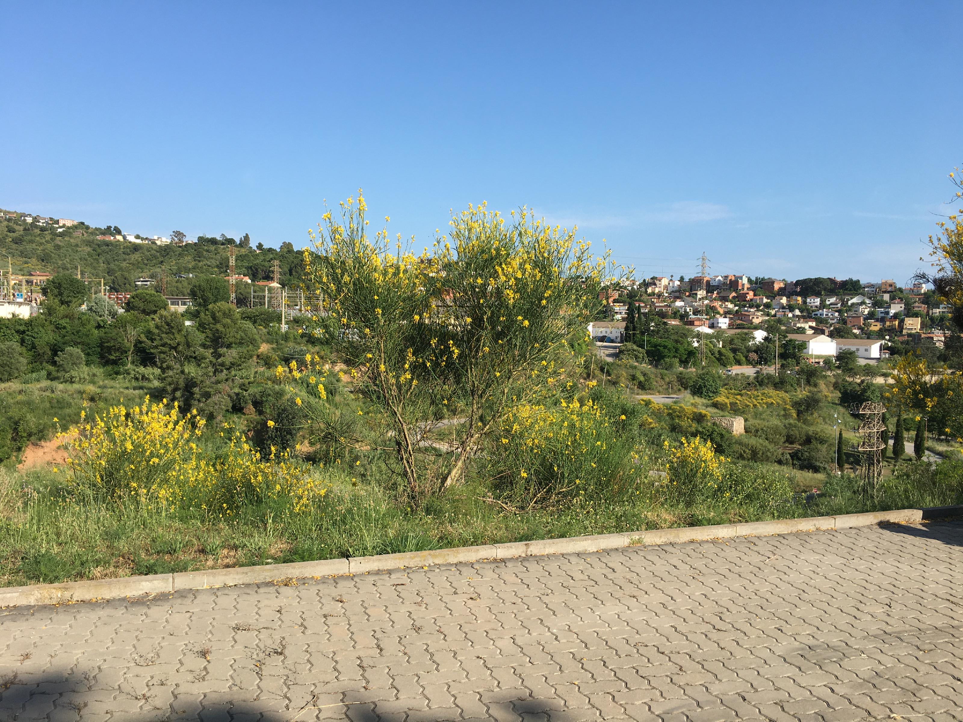236301 Urban Plot for sale in Can Melich 5